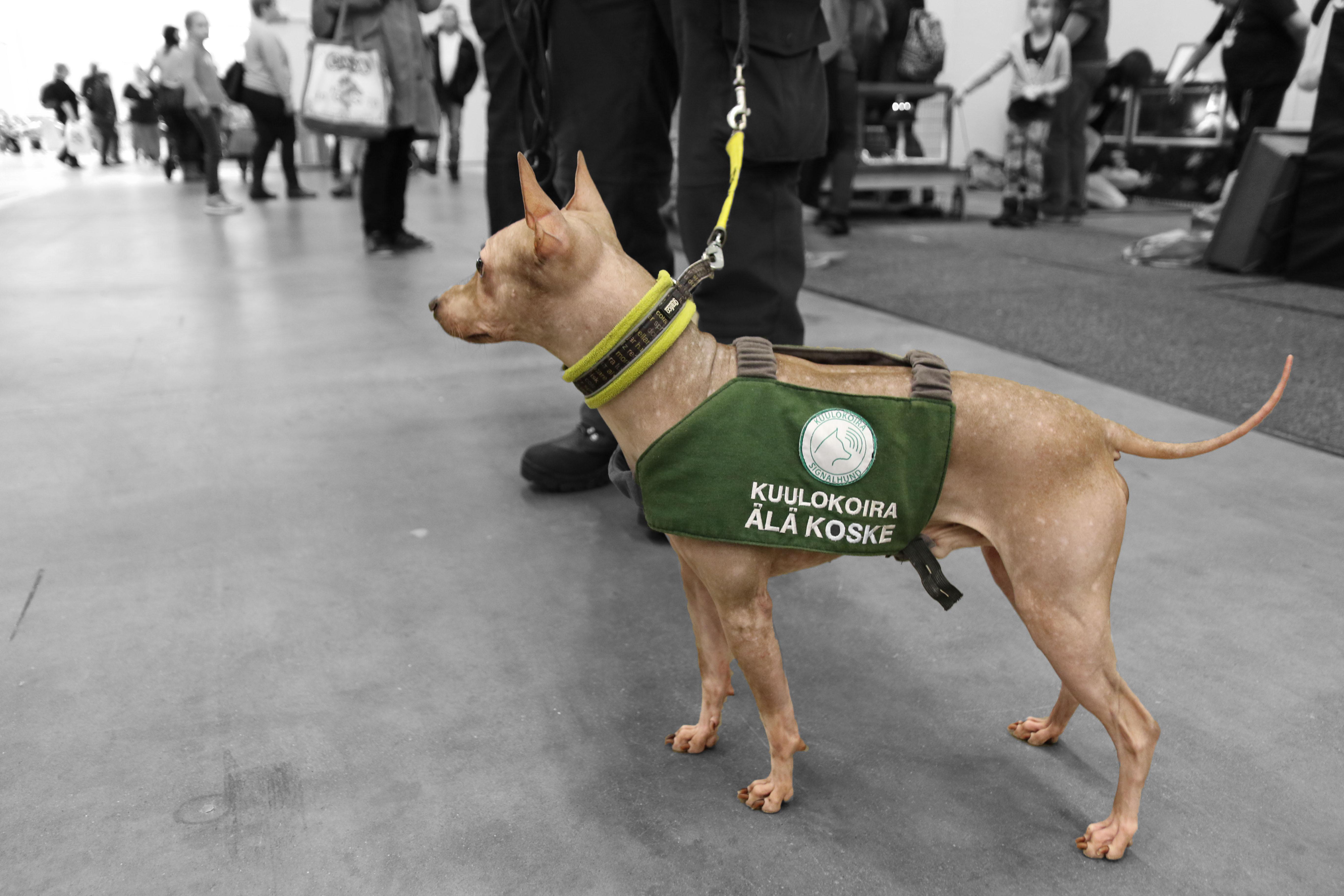 hearing dog vest