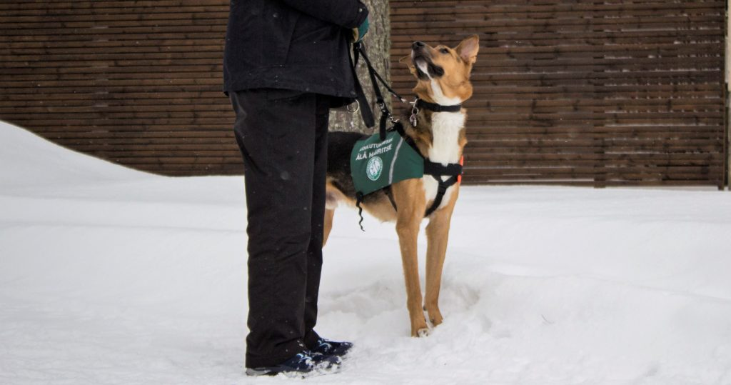 Kuvassa taustalla ruskea seinä, maassa lunta. Seinän edessä seisoo ihminen tummissa vaatteissa, hänestä näkyy jalat ja osa torsoa. Vieressä seisoo vaaleanruskea koira, joka katsoo ylös kohti ihmistä. Koiralla on vihreät liivit.