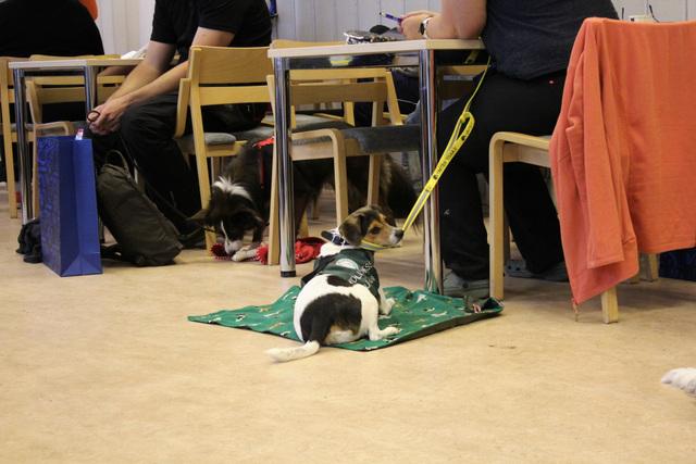 Kuvituskuva, Ihmisiä istuu luentosalissa pöytien ääressä. Lattialla makoilee keskikokoinen koira (tanskalais-ruotsalainen pihakoira) vihreällä matolla. Koiralla on yllään vihreät liivit ja se on keltaisessa hihnassa.